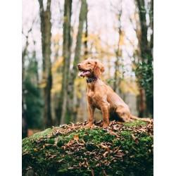 Médaillon GPS tracking pour chien