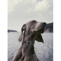 Collier traceur GPS pour chien ou chat - Argenté